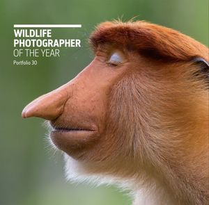 WILDLIFE PHOTOGRAPHER OF THE YEAR *
