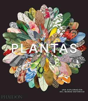 PLANTAS *