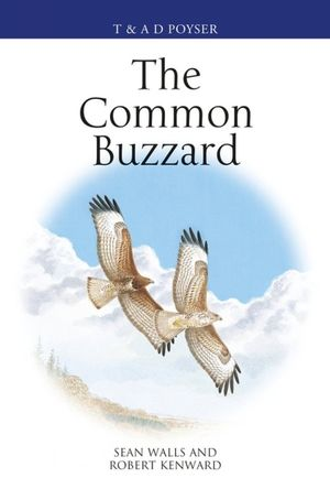 THE COMMON BUZZARD *