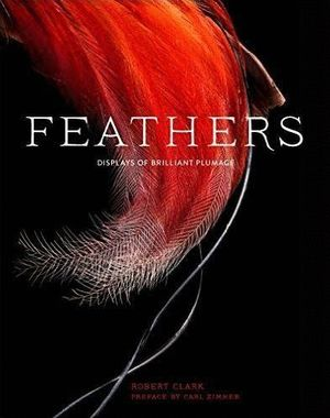 FEATHERS *