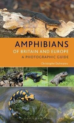 AMPHIBIANS OF EUROPE, NORTH AFRICA & THE MIDDLE EAST *