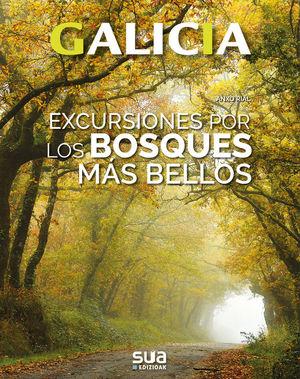 GALICIA. EXCURSIONES POR LOS BOSQUES MAS BELLOS