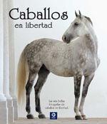 CABALLOS EN LIBERTAD *