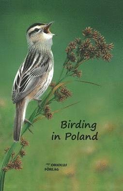 BIRDING IN POLAND *