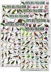COSTA RICA FIELD GUIDE. SET OF 7 GUIDES *