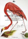 AUDUBON'S BIRDS OF AMERICA *