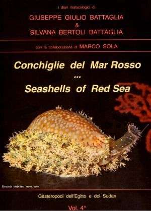 CONCHIGLIE DEL MAR ROSSO-RED SEA'S SEASHELLES. SEASHELLS OF RED SEA *
